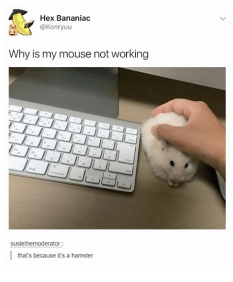 why is my not hex bananiac why is my mouse not working susiethemoderator that s because it s a