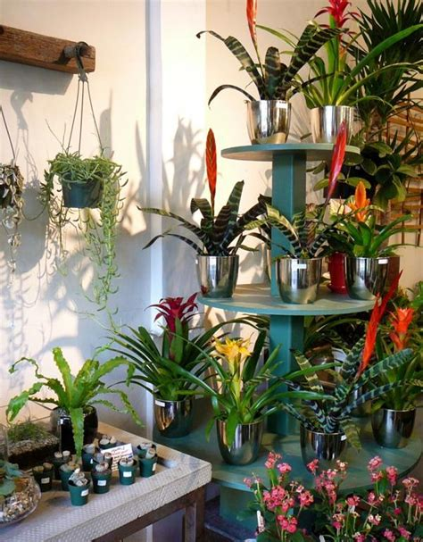 plant used as decoration decoration with tropical plants how to care for bromeliads properly interior design
