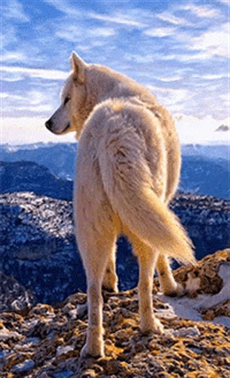 Landscape Gif Wolf Sky Gif Wolf Sky Mountain Discover Gifs