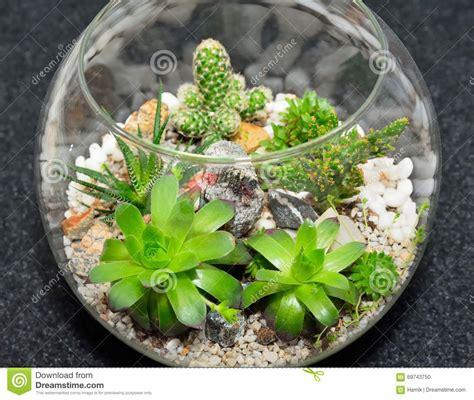 table top plant decorative garden stock photo image