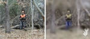 what colors do deer see can deer see blaze orange qdma