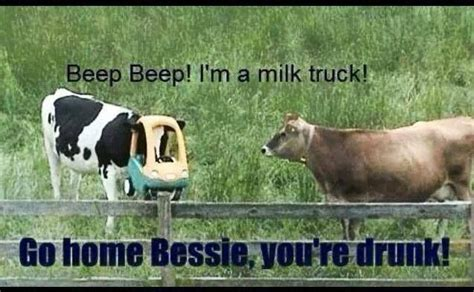 Funny Cow Memes - funny cows funny pinterest haha wells and cow