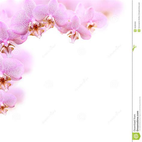 Setelan Flower White vector anggrek studio design gallery best design