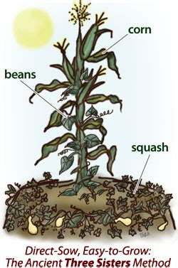 iroquois uses of maize and other food plants classic reprint books companion planting three the farmer s almanac