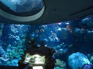 reef picture of shedd aquarium chicago tripadvisor