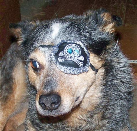 eye patch for dogs eye patch leather custom embroidered pirate eye care
