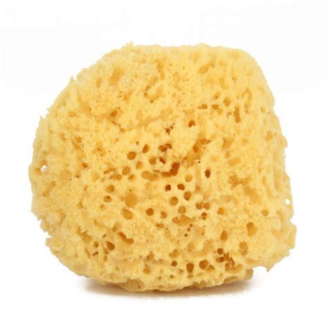 new sponge hair pics new sponge hair pics newhairstylesformen2014 com