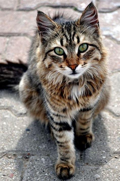 imagenes para fondo de pantalla tiernas descargar fotos de gatitos tiernos al celular im 225 genes
