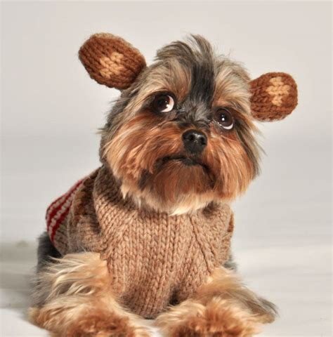monkeys dogs sock monkey sweater with ears by chilly boutique at mutt