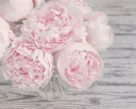 pink peonies nursery flower photography pink peonies pink and gray shabby