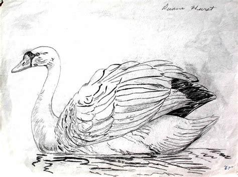 Pencil Drawings Of Swans