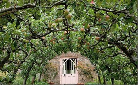 how to espalier fig trees cottage garden living
