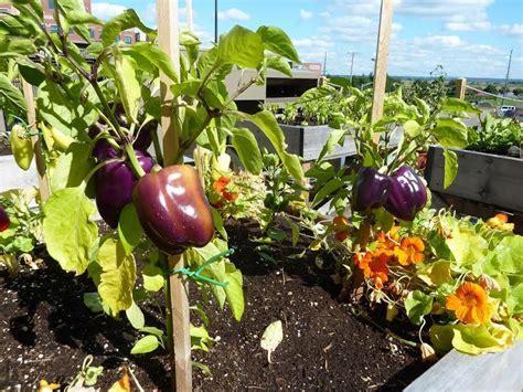 orto terrazza come cosa e quando coltivare in vaso l orto sul balcone