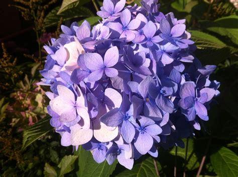 Garten Blumen by Garten Blumen 183 Kostenloses Foto Auf Pixabay