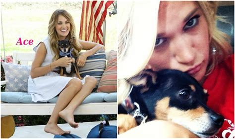 carrie underwood dogs carrie underwood works in shelters and herself has 2 dogs