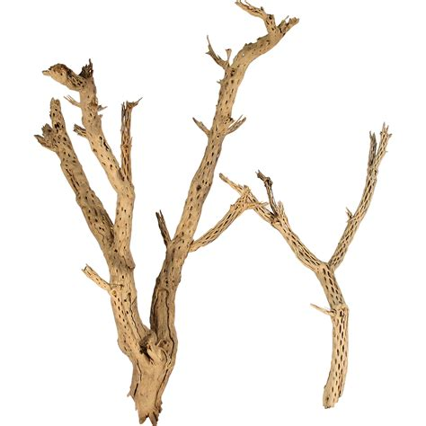 decorative branches cholla wood