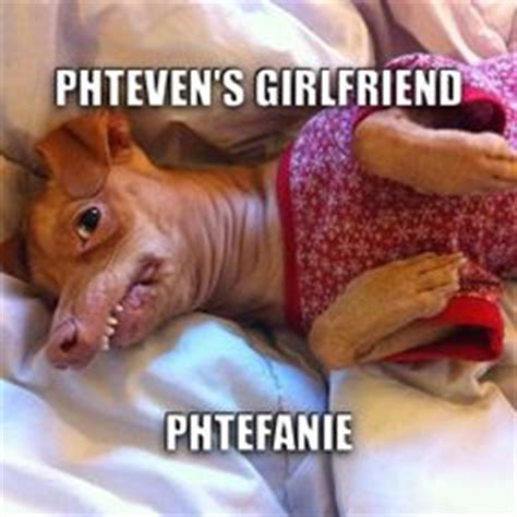 Stephen Dog Meme - 1000 images about phteven the dog on pinterest tuna