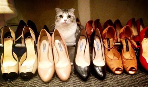 taylor swift cat heels taylor swift s cat sits among her shoes