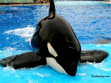 imagenes sorprendentes de ballenas fotos de ballenas y orcas i
