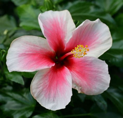 best flowers in the world flowers from hawaii oahure hawaii flowers