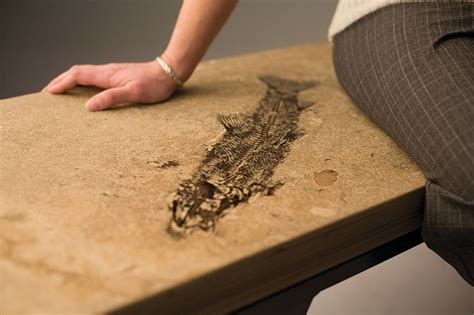 Fossil Countertops by 17 Best Images About Design Decor On Morocco Moroccan Decor And Tropical Bathroom