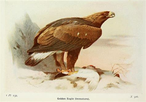 b3 the baby eagle based on a true story books of emily willoughby top 10 fictional birds based on