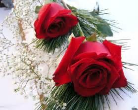 rosas rojas fondos de rosas rojas fondos de pantalla de rosas rojas