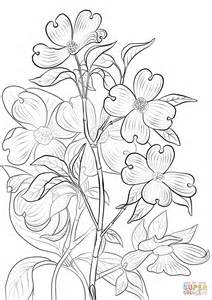 coloring pages of dogwood flowers flowering dogwood coloring page free printable coloring