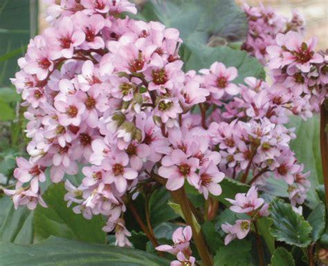 fiori per aiuole invernali giardinaggio la rivista e il portale giardinaggio
