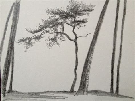 A Sketches Of Trees by Sketches Of Trees Jojohnstondotnet