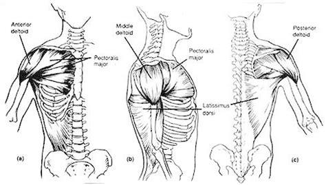 shoulder joint pain bench press shoulder training 101