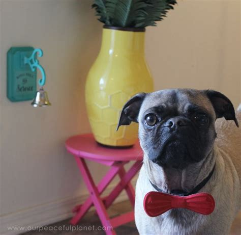 how to potty a pug puppy posh potty bell hometalk