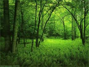 Aquascape Plants List List Nation Wallpapers 24 Plants Forest Wallpapers