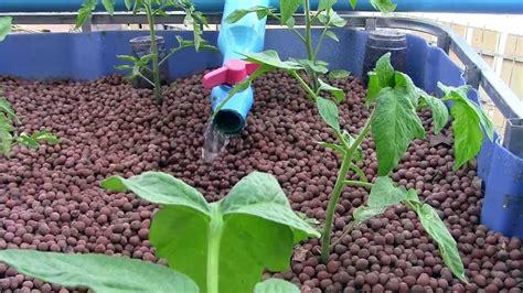 gardening hydroponics learn the amazing of growing fruits books aquaponics vs hydroponics