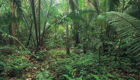tropical desert animals and plants the difference between desert plants rainforest plants