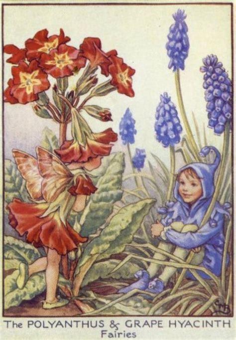fate e fiori fate dei fiori fata della primula e fata giacinto