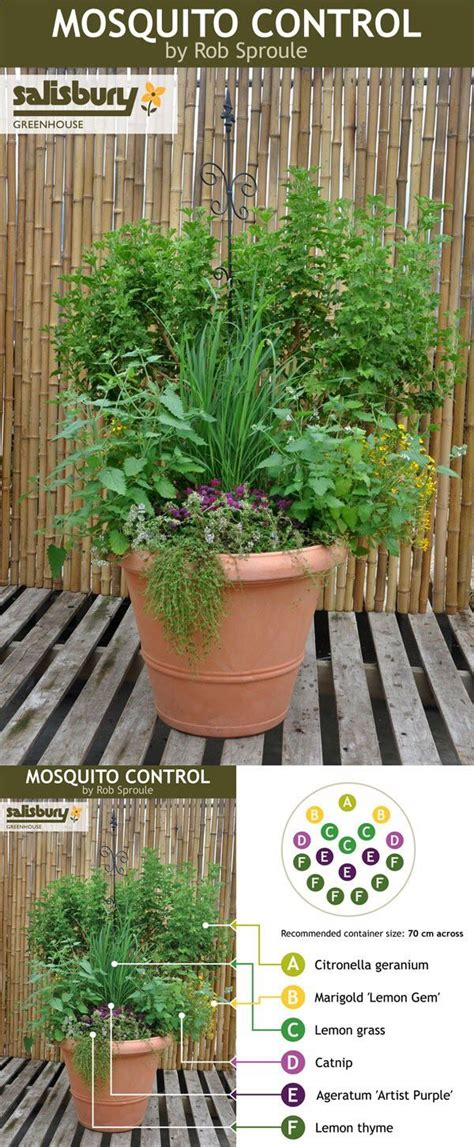 mosquito repelling pot for the patio the small things