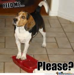 Beagle Meme - beagle memes best collection of funny beagle pictures