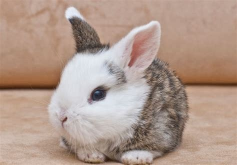 24 Cute Bunny Pictures You Will Definitely Love   CreativeFan