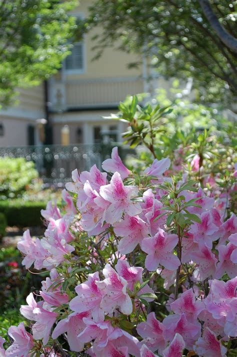 southern comfort mobile homes 8 best blue bell flowers images on pinterest