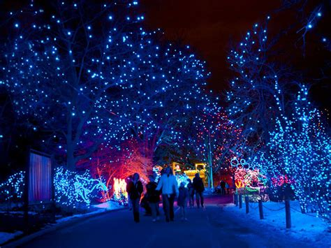 denver zoo lights tickets tickets for denver zoo s zoo lights now available for