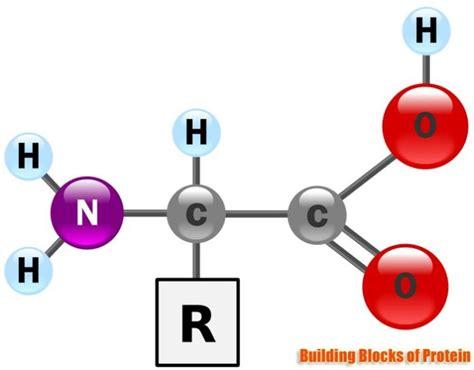protein building blocks building blocks of proteins structure properties