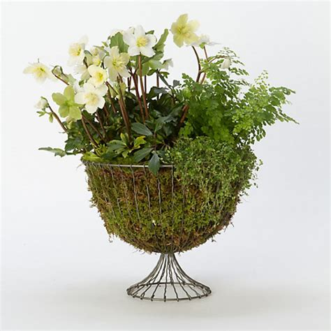 Wire Planters by Wire Urn Planter 12 Quot Terrain