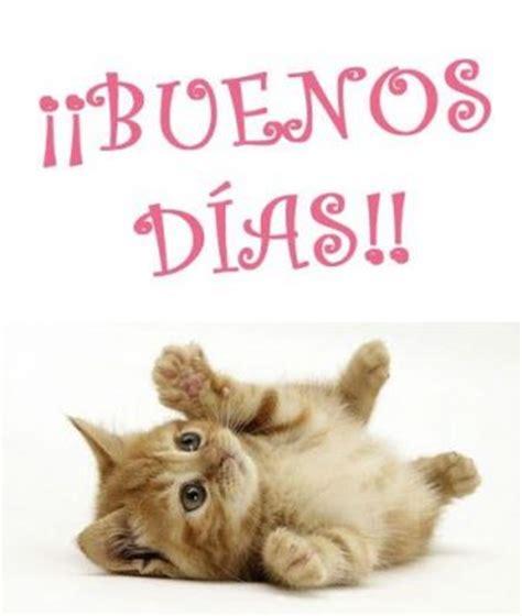 imagenes de gatitos tiernos de buenos dias divertidas imagenes de buenos dias con gatitos lindos