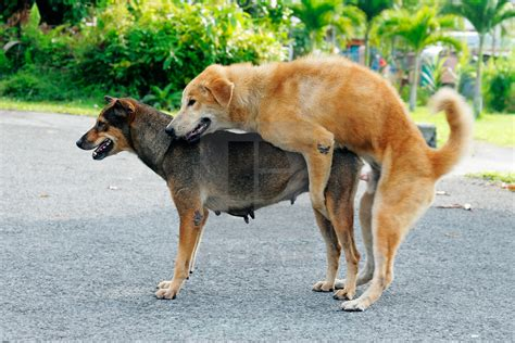 dogs mating pin dogs mating with humans for real on