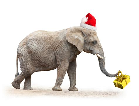images of christmas elephants the festive season in africa african portfolio