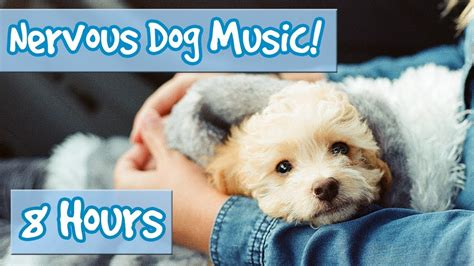 songs for dogs songs for nervous dogs calm your anxious pup soothing for hyperactive dogs