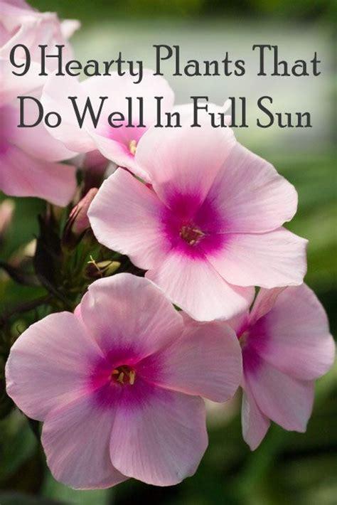 full sun flower beds best 25 full sun garden ideas on pinterest full sun landscaping perrenial flowers
