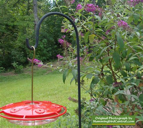 Hummingbird Garden Plants Hummingbird Garden Plans Hummingbird Garden Flowers