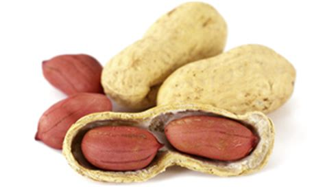 wheezing and coughing peanut allergy underdiagnosed in with asthma the clinical advisor
